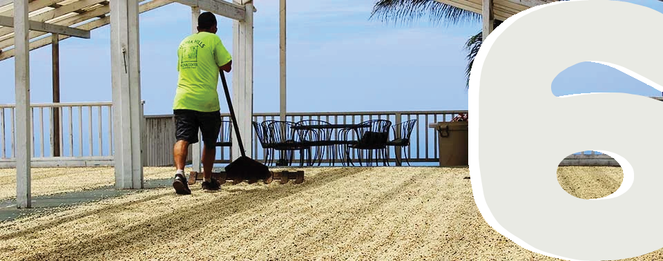 Drying Kona coffee seeds on a patio.