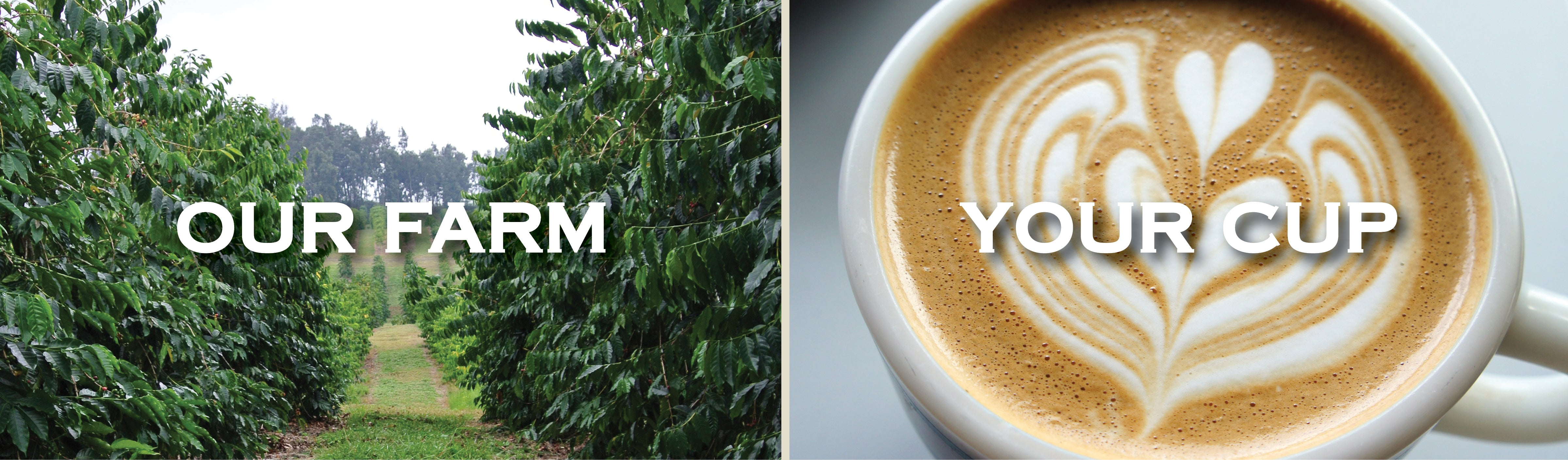 """A Kona Coffee Farm next to a cup of Freshly Poured Kona Coffee, text """"Our Farm Your Cup"""""""