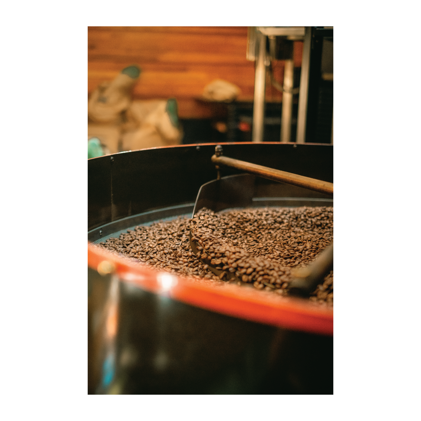 Roasted Coffee in a Cooling Tray