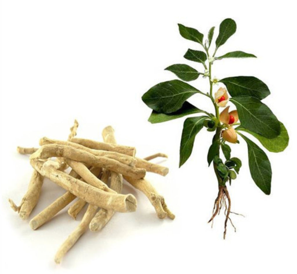 Benefits of Ashwagandha
