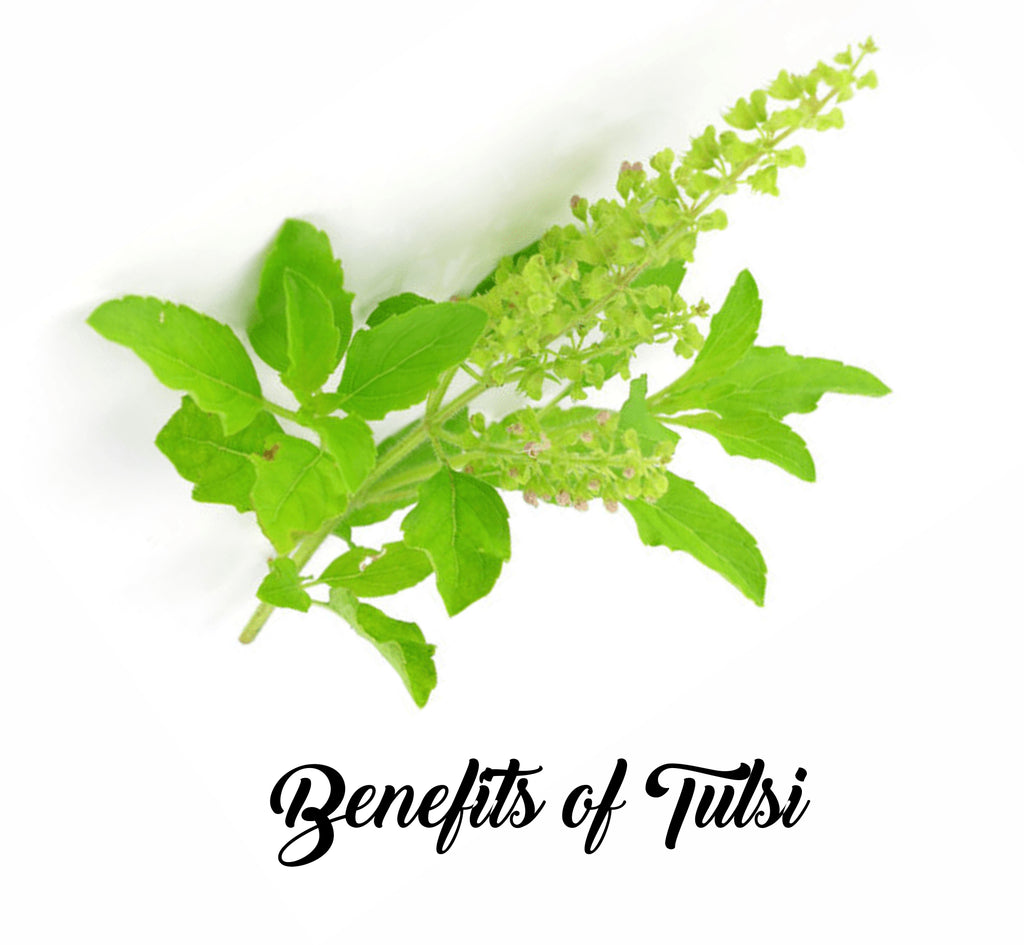 Benefits of Tulsi for Adult and Children