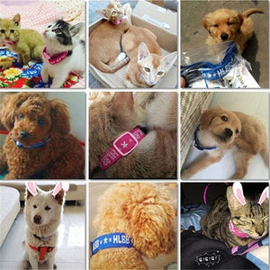 1Pcs Nylon Dogs Collars Effective Anti Fleas Ticks Mosquito Collar Neck Strap for Cats Dogs