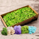 1 Bag Reindeer Artificial Craft Flower Micro Moss Plant Landscape Fake Wedding Decor Colorful