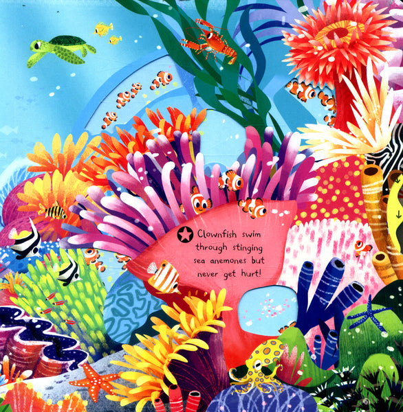 First Explorers - Sea Creatures