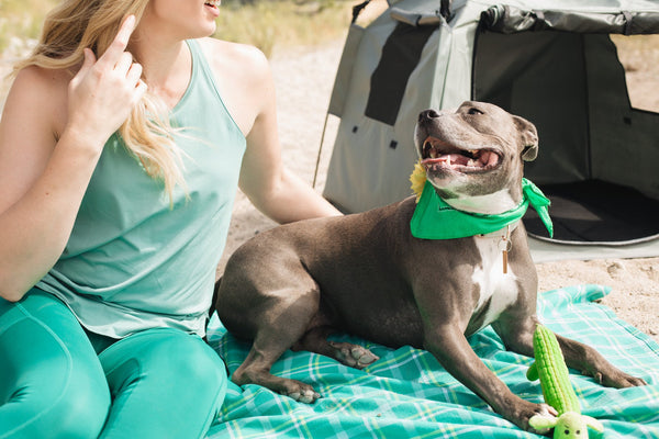 Planning a Vacation Soon? Take Your Pup With You in The Pop N Go Pets Playpen