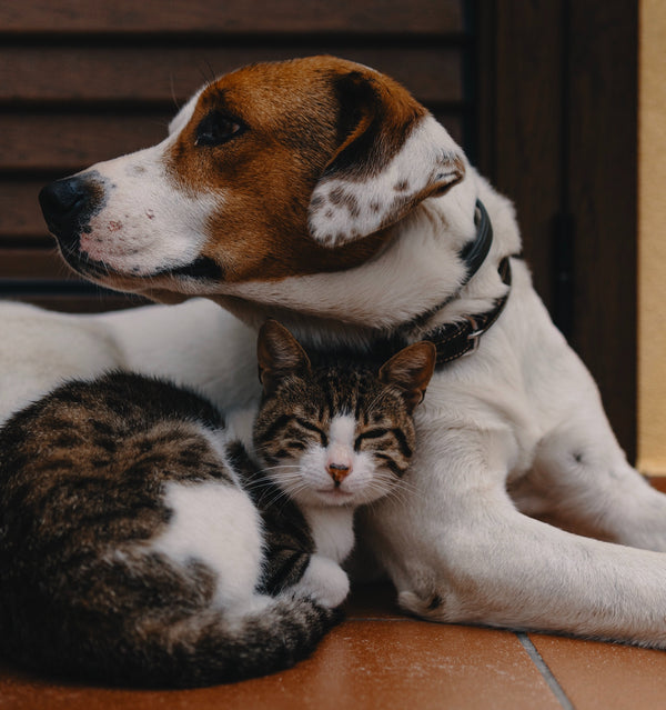 Find Out Whether You're a Cat or Dog Person Based on These Characteristics