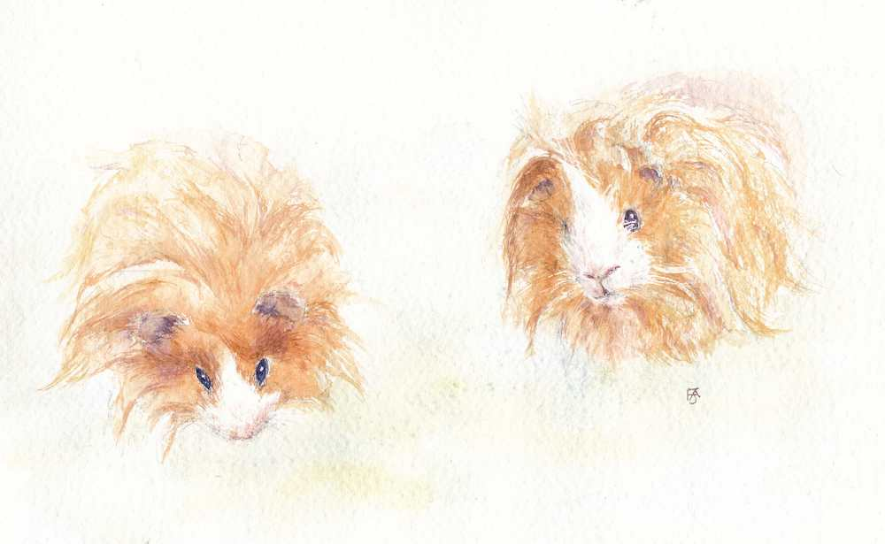 The Best Things in Life Are....Guinea Pigs!