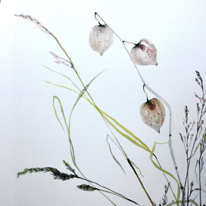 Chinese Lanterns and Grasses