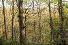 Load image into Gallery viewer, Winter Woodland around Cromford