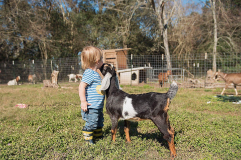 Goat kissing grandson