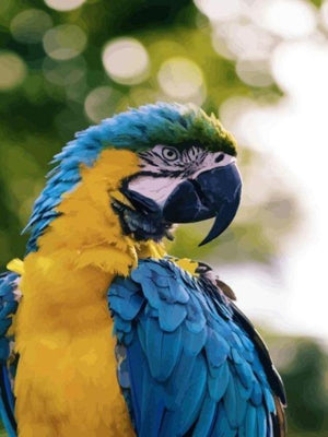 Blue & Gold Macaw - Paint by Numbers HD