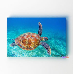 Sea Turtle - Paint by Numbers Classic