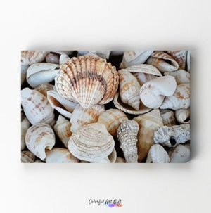 Seashells - Paint by Numbers HD