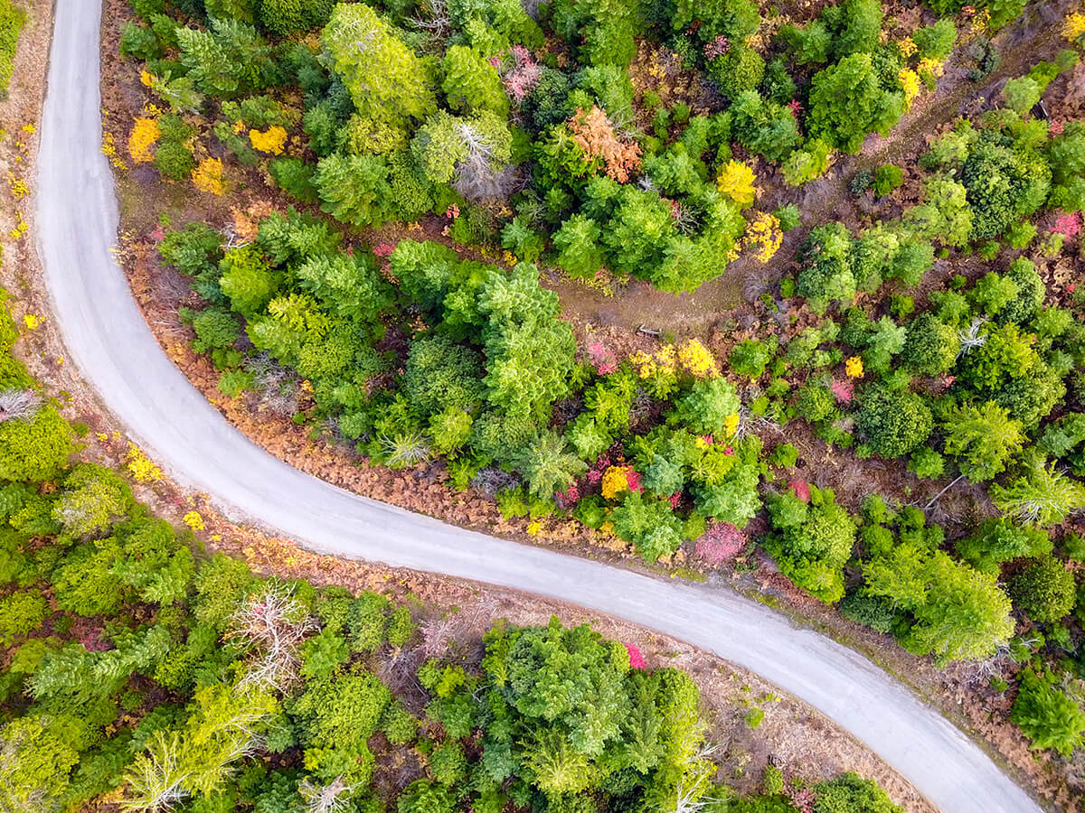 Ariel view of a road winding through a forest.