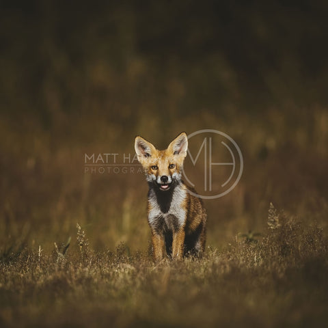 Foxes 18 Photo Print