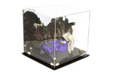 "Versatile Deluxe Acrylic Display Case Medium Square Box with <br><sub> Risers and Mirror <br>10"" x 10"" x 10""(A028), Display Case, Better Display Cases, Better Display Cases - Better Display Cases"