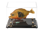 "Small Versatile Display <br> Clear Rectangle Case <br><sub> 9.5"" x 6"" x 6.5"", Display Case, Better Display Cases, Better Display Cases - Better Display Cases"