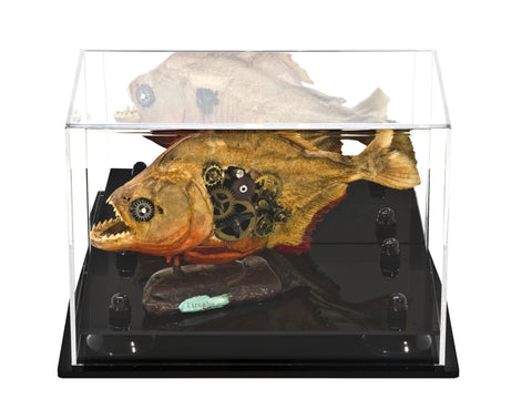 Small Versatile Display <br> Mirrored Rectangle Case <br><sub> 9.5 x 6 x 6.5 </sub>, Display Case, Better Display Cases, Better Display Cases - Better Display Cases