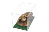 "Versatile Deluxe Acrylic Display Case - Medium Rectangle Box and Turf Bottom 14"" x 8"" x 8.5"" (A011-TB), Display Case, Better Display Cases, Better Display Cases - Better Display Cases"