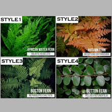 Load image into Gallery viewer, 100Pcs Miniature Fern Plant Seeds for Office Garden Decoration
