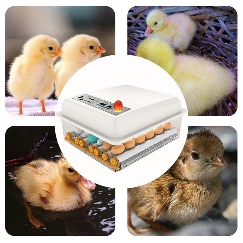 New Upgrade Eggs Incubator 16 Eggs Digita Mini Automatie Incubatores with Turner for Hatching Turkey Goose Quail Chicken Eggs Egg Hatcher Machine