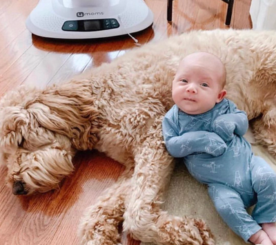 Introducing Baby to Your Dog