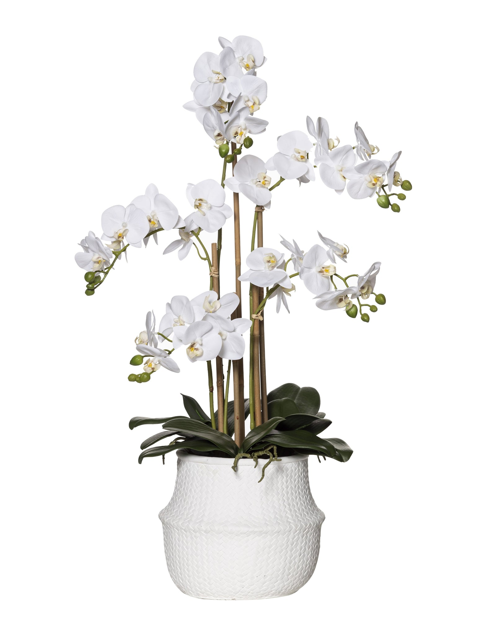 Butterfly Orchid Basket Pot