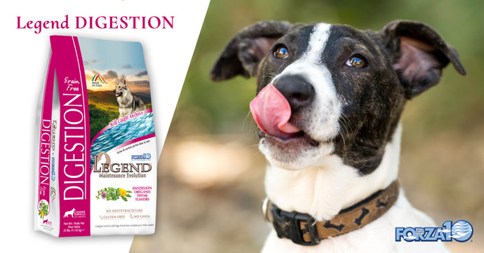 Legend Digestion: the best dog food for digestive problems
