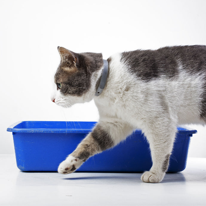 Management of struvite stones in cats fed with URINARY ACTIVE