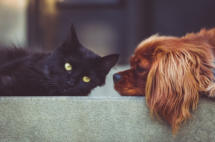 The most frequent chronic diseases affecting dogs and cats - The role of contaminants