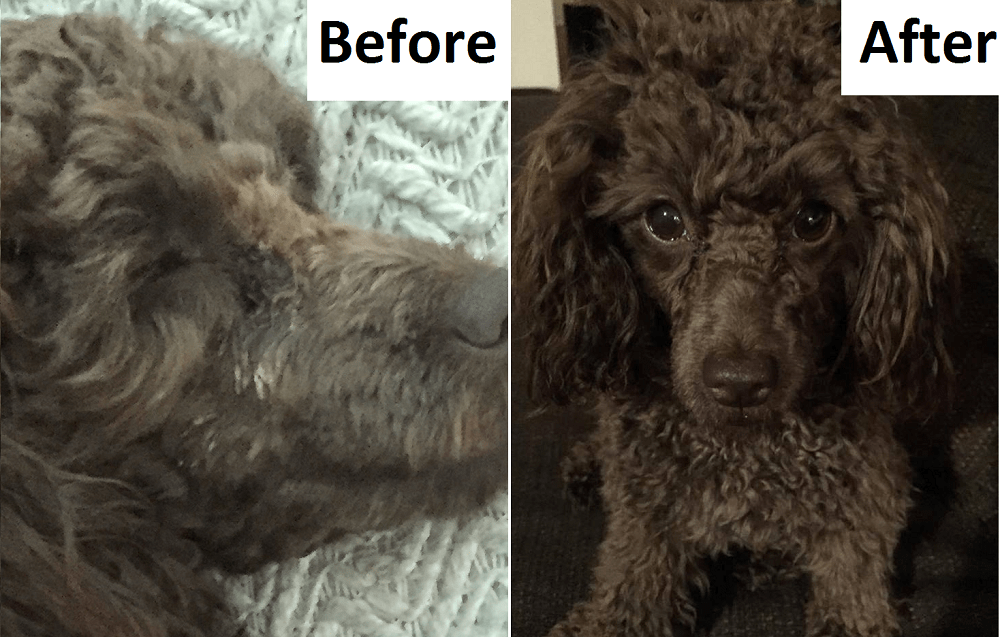 cocoa-before_after