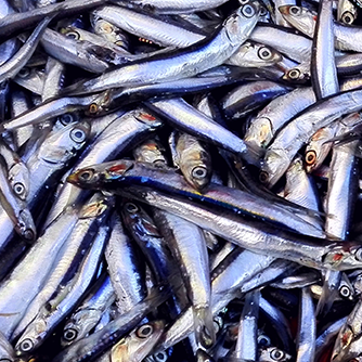 Wild-Caught Anchovies
