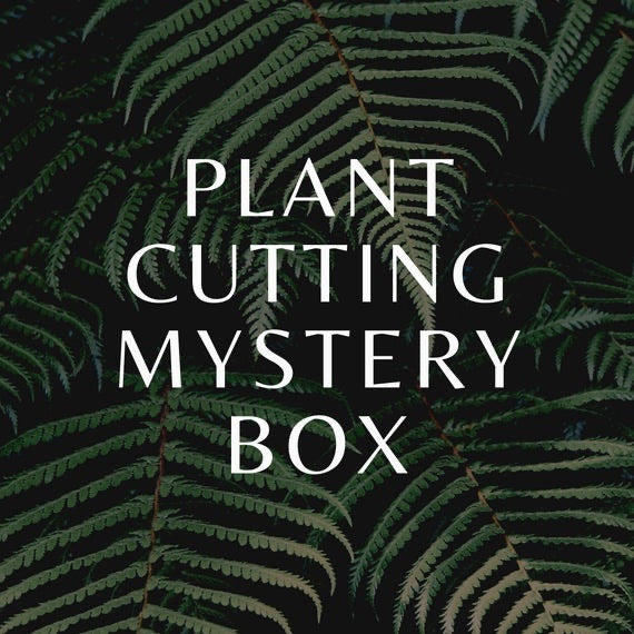 Houseplant box of cuttings - Houseplant