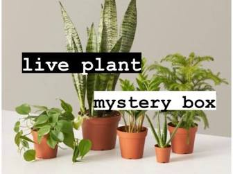 Mystery Plant ?!? Free Shipping - Subscription