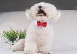 Pets Bow Tie Collar - Whiskerr