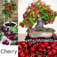 Load image into Gallery viewer, Mixed 300pcs Fruit Seed Plants Bonsai 25 Kinds of Delicious Fruit Tree Seeds for Home Garden to Plant Easy to Grow