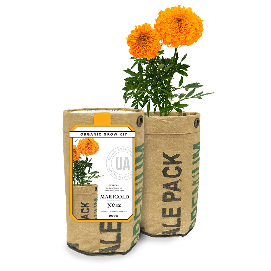 Marigold Organic Grow Kit