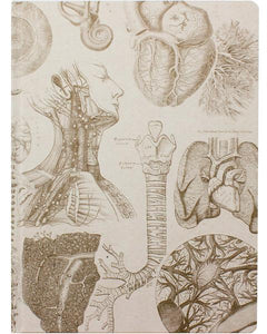 Human Anatomy XL Journal