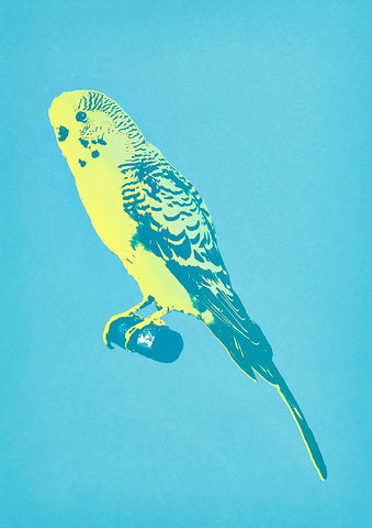 Booth Budgie Greetings Card - Inspired