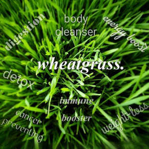 Organic Wheatgrass Nutri-Shots