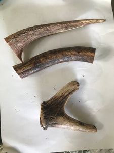 Australian Deer Antler - assorted sizes