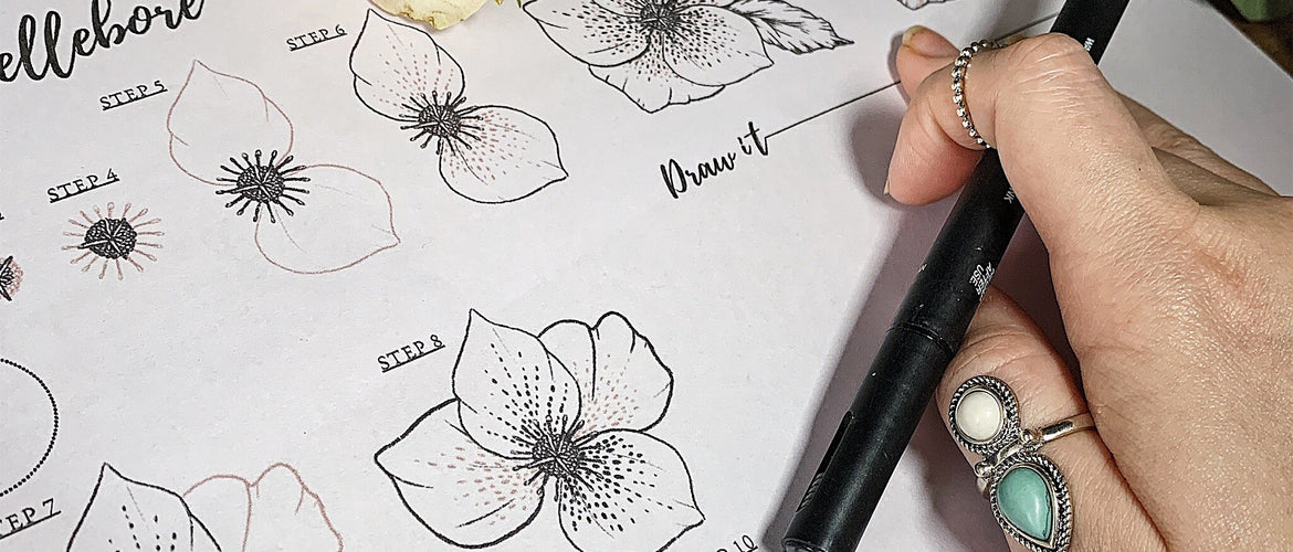 How To Draw Garden Flowers Workbook | Free Hellebore Sheet