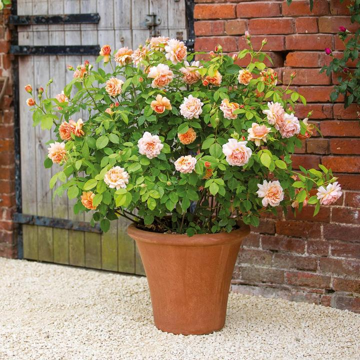 Grace 6 ltr pot (C6)