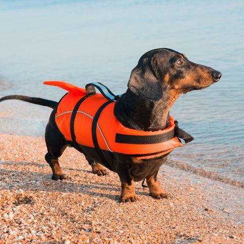 right life vest for your dog