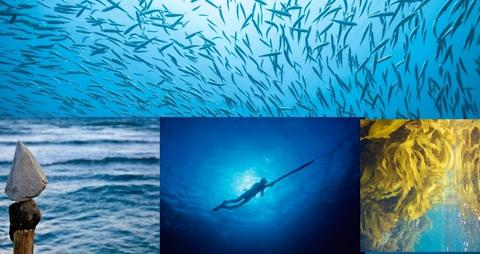 small fish, food sources, pacific ocean, coral reefs, lost at sea, spear gun