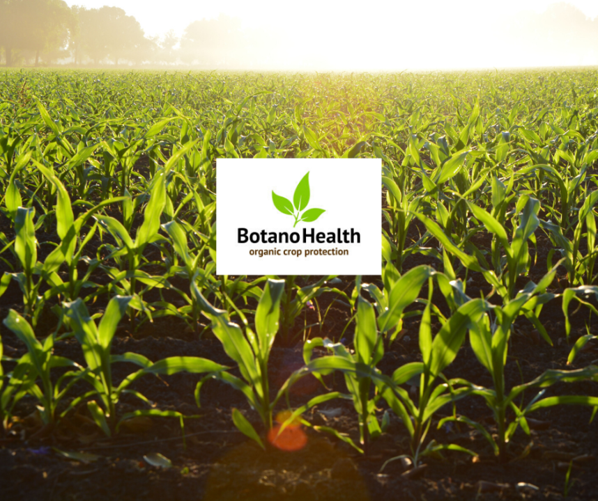 BotanoHealth - reducing the staggering 30% food loss due to plant disease and fungus