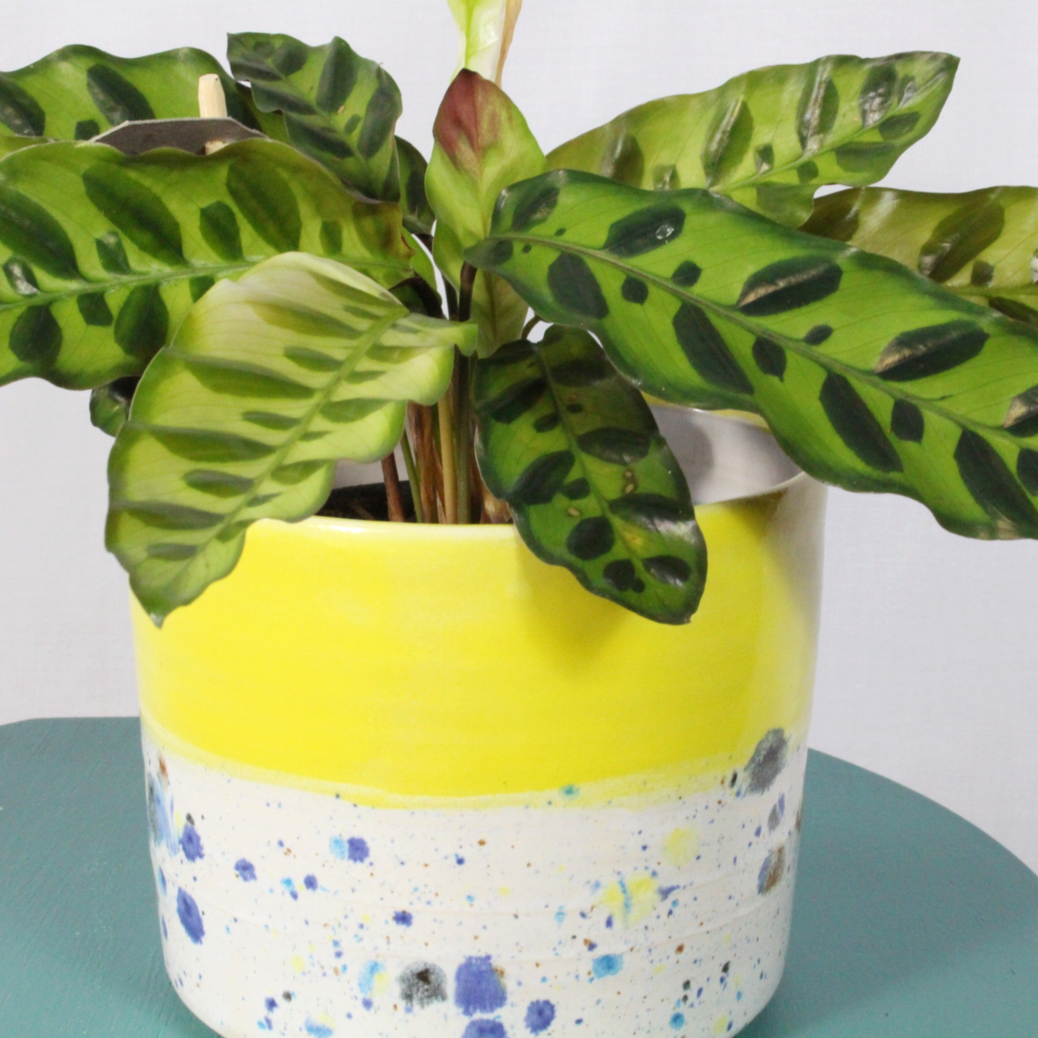 Yellow Shoreline Pot