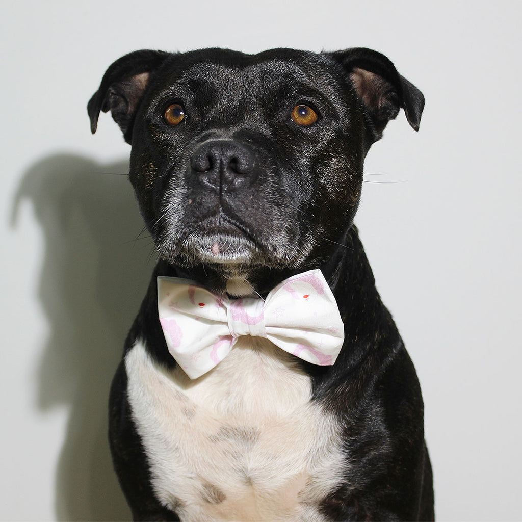 Princess - Bow Tie - The Sophisticated Pet