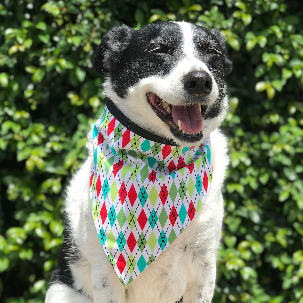 Oh Boy It's Chrtistmas - Bandana - The Sophisticated Pet