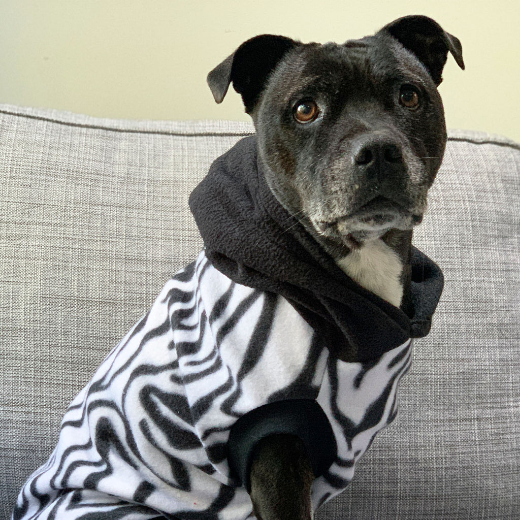 Zebra Crossing - Hoodie - The Sophisticated Pet